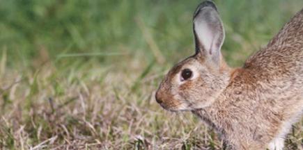 cabecera-carne-conejo-caza-810×293