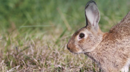 cabecera-carne-conejo-caza-810x293