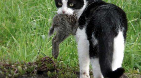 Jaime Valladolid abogado gato caza